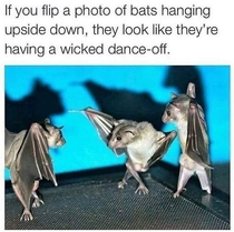 Baturday Night Fever