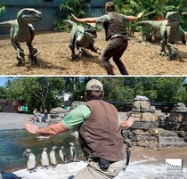 Be it penguins or velociraptors zookeeping is hard work -Woodland Park Zoo