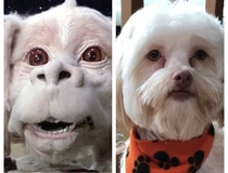 Been trying to figure out what my Aunts dog reminded me of then it hit me