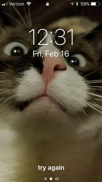 Can I Lock My Keybaord From My Cat