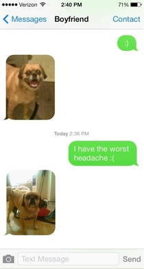 BF met an expressive dog and now uses photos of him instead of emojis