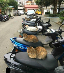 Biker gang terrorizes local residents