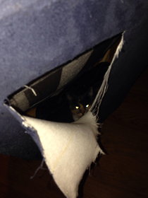 Bought a couch from Craigslist heard noises coming from it after bringing it home Cut it open and found a cat
