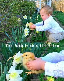 Boy helps his pet chicken smell a flower  from rpics