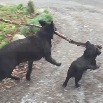 Branch Manager amp Assistant to the Branch Manager