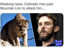 Breaking News Colorado Man Paid Mountain Lion To Attack Him