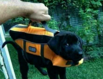Briefcase containing important lab results