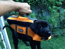 Briefcase with important lab results