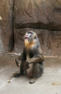Brother went to the zoo and caught this baboon having an epiphany