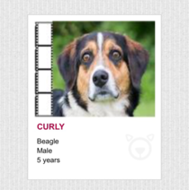 Browsing my local animal shelters site - Curly looks like hes seen some shit