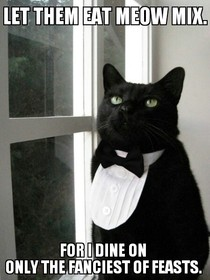 Business Cat Lets have some One Percent Cat