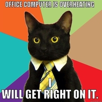 Business cat wants to help