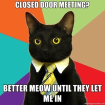 Business Cat you say