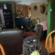 Cactusthe only plant that cats wont mess with