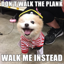 Can Pirate Dog please be a meme