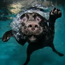 Cant stop laughing at these dogs underwater