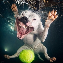 Cant stop laughing at this dog underwater