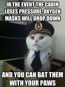 Captain Kitty here with some in-flight safety tips for you