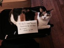 Cat gives its opinion on feminism