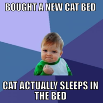 Cat owners will be jealous of this victory