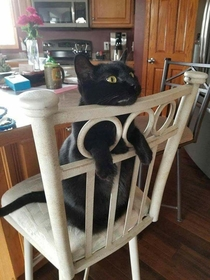 Cat shows you the right way to use chair holes