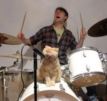 cat singing on drums set