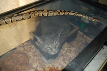 Cat wouldnt leave my snake alone So I tried some role reversal