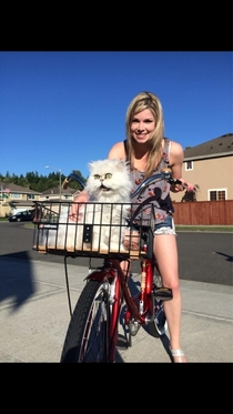 Cats first bike ride Was not pleased