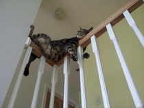 Cats sleep in the weirdest places