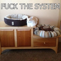 Cats summarized