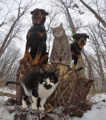 CatsnDogs - Dropping the hottest RnB album this year