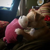 Caught my dog having an intimate moment with his toy today