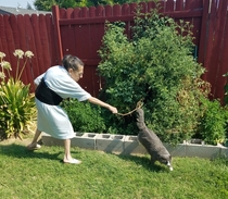 Caught the perfect shot of my mom trying to get the cat out of the tomato garden