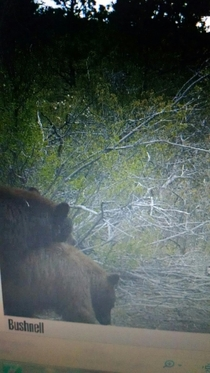 Checked the trail camera and all I saw were fucking bears