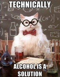 Chemistry cat tells no lies
