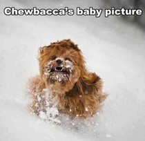 chewbaccas baby pic