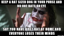 Chihuahua owners vs pet rat owners