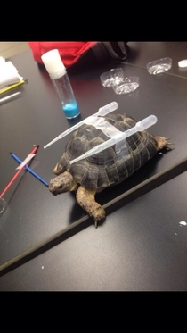 Class Turtle has evolved into Blastoise