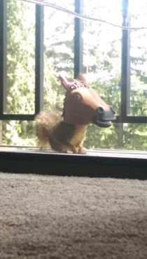 Co-worker finally captured a pic of a squirrel using his new horse head feeder