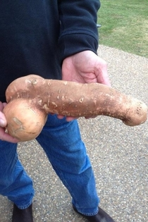 Correction THIS is the most penis-like sweet potato you will see all day- guaranteed