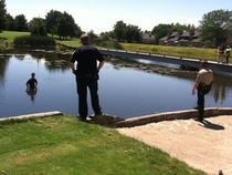 Criminal jumps in pond and the waiting game ensues