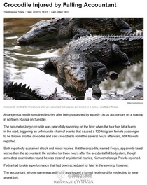 Crocodile injured by a falling accountant A sentence I thought I will never read in my entire life