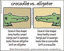Crocodile vs Alligator