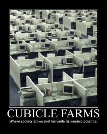 Cubicle farms
