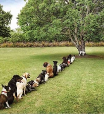 Damn deforestation is really taking a toll on the dog community