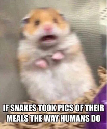 Damn snakes and their instagrams