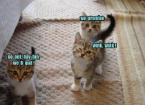 Dem Sneaky Kitties
