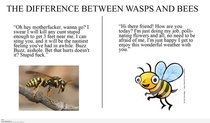 Difference between wasps and bees