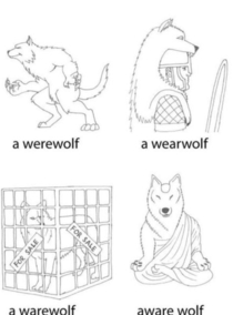 Different types of wolves