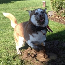Digging a hole  why do you ask